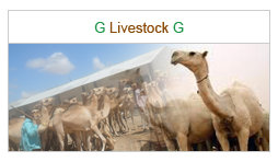 Guul Group Livestock